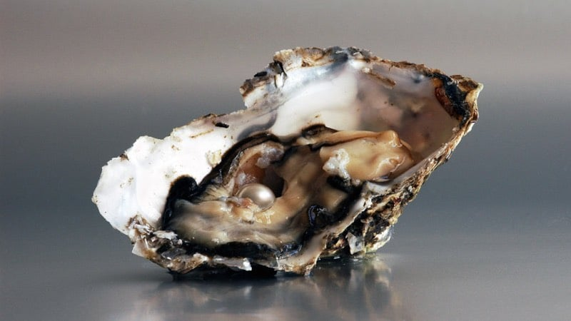 Raw Pearl in Oyster for Necklace