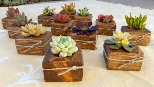 Succulent Wedding Favors Gift for Guests